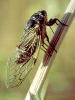 entomo2