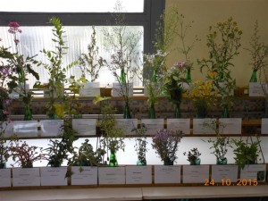 Salon 2015, une petite partie des plantes exposées