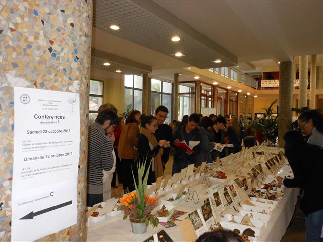 Salon 2011 - Les étudiants en pharmacie révisent