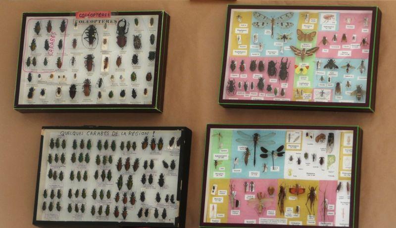 Insectes de la région